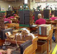 Cigars being made in factory